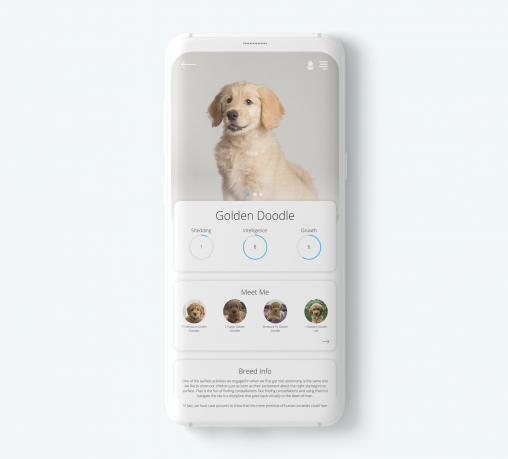 Dog App Mockup
